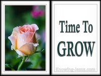 Time To Grow  - Grace Thru Faith- study [6]